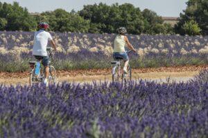 Vélo sur le Plateau de Valensole
